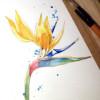 Рисуем экзотический цветок стрелиции акварелью