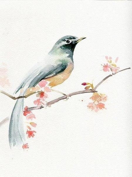 Урок малювання аквареллюяк намалювати пасторальну пташку - уроки малювання