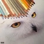 Karla Mialynne фотореалистичные работы цветными карандашами