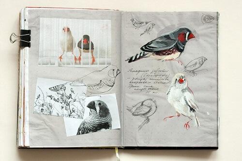разворот скетчбука с наклейками птиц