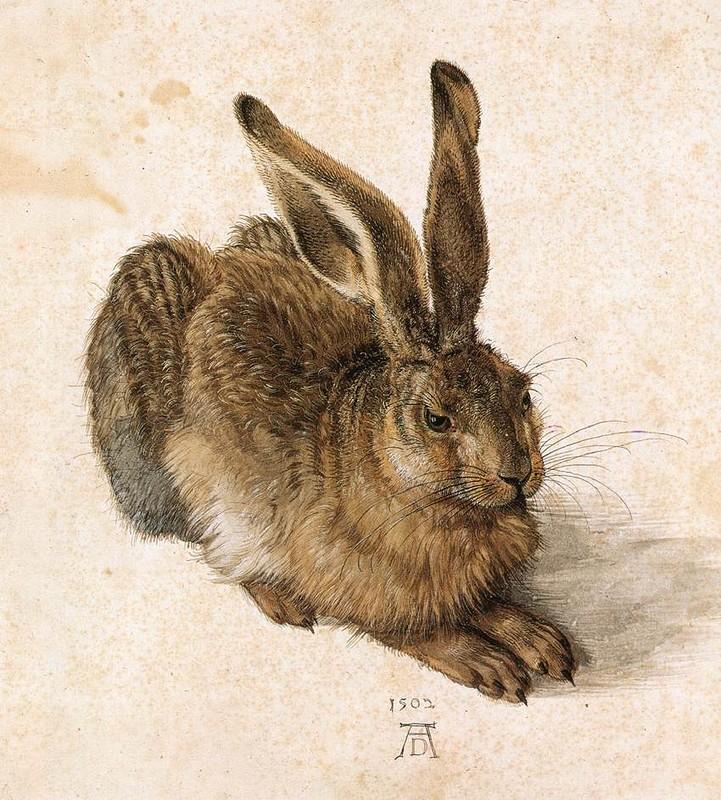 Альбрехт Дюрер, «Молодой заяц», 1502 г.