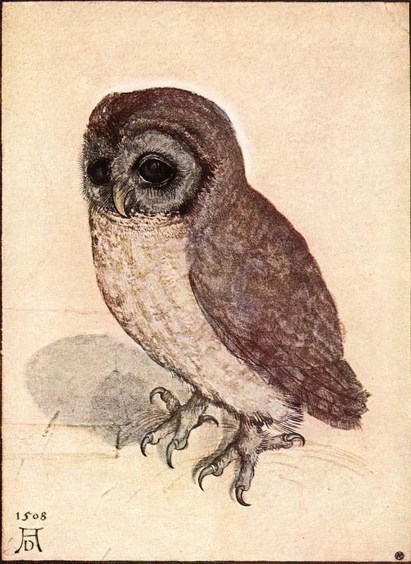 Альбрехт Дюрер, «Маленькая сова», 1508 г.
