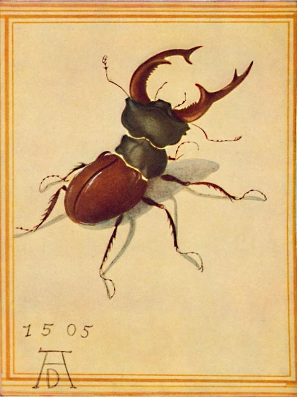 А.Дюрер. Рогач. 1505 г. акварель