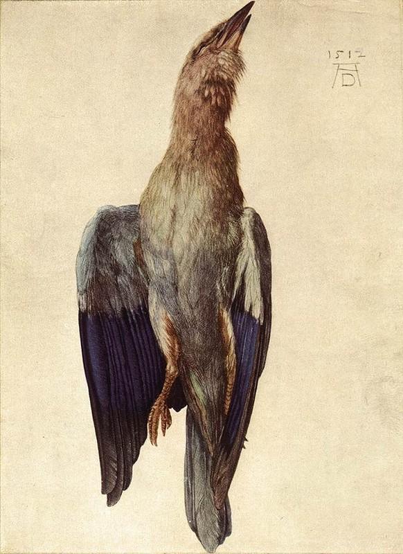 Альбрехт Дюрер, «Мёртвая голубая птица», 1512 г.