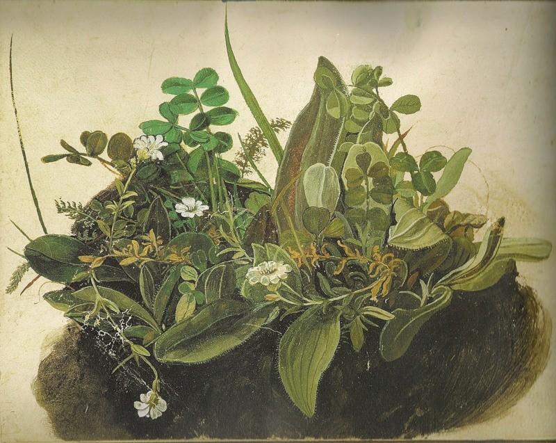 Альбрехт Дюрер (1471-1528) Луговая трава, 1503. Акварель