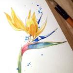 Рисуем экзотический цветок стрелитции акварелью