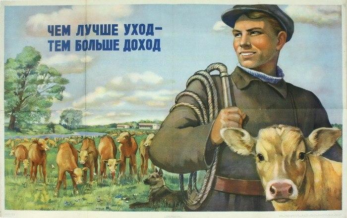 Плакат СССР для скотоводов. 1954 г.
