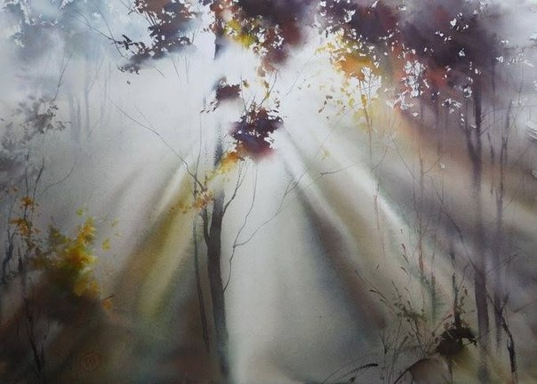 солнца свет сквозь туман пейзаж