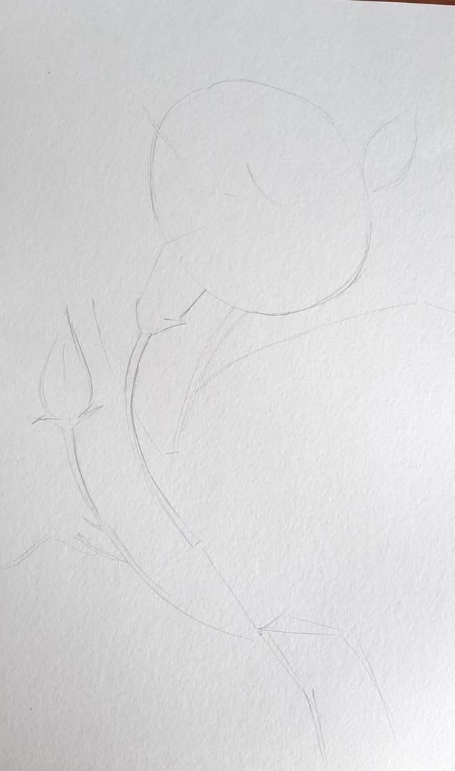 Рисуем алую гвоздику акварелью и гелевой ручкой